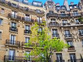 Paris.typical Architectural Details Of City Facades With Growing Green Tree poster