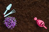 Gardening Tools On Fertile Soil Texture Background Seen From Above, Top View. Gardening Or Planting  poster
