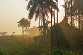 Morning Scene , Agriculture Land - Rural India poster