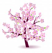 pic of cherry blossom  - Blossoming spring tree - JPG