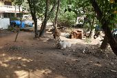 Typical Rural Court Yard In Rural Areas Of India poster