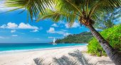 Sandy Beach With Palm Trees And A Sailing Boat In The Turquoise Sea On Paradise Island. poster