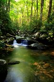 picture of gatlinburg  - peaceful smokey mountain stream near gatlinburg tennessee - JPG