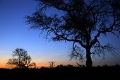Sundown In Balule Nature Reserve. Kruger National Park, South Africa poster