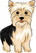 picture of yorkie  - Illustration Featuring a Yorkshire Terrier - JPG