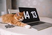 Young Ginger Cat Sleep On Table Near With Laptop. Smart Handsome Kitten Dream About Something. Domes poster