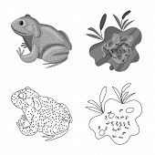 Vector Design Of Wildlife And Bog Sign. Set Of Wildlife And Reptile Vector Icon For Stock. poster