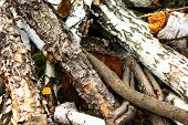 Close Up Of Tree Trunk In Forest poster
