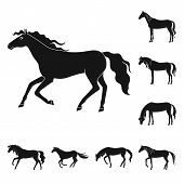 Vector Design Of Fauna And Mare Icon. Set Of Fauna And Stallion Stock Symbol For Web. poster