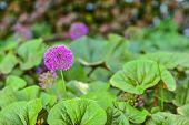 Purple Decorative Bow, Purple Flower Close-up, Ball-shaped Purple Flower, Purple Bow poster
