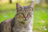 Domestic Cat On A Walk In The Yard . A Pet. Cat. Cat On A Walk. Mammal. Animal Hair. poster