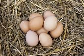 Fresh Eggs In Straw Nest.