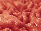 picture of mucosa  - 3d rendered close up of human stomach lining - JPG