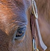 foto of horses ass  - close up of a brown  horse eye - JPG