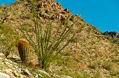 stock photo of piestewa  - Cactus on the Side of Piestewa  - JPG