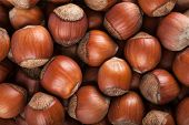 stock photo of hazelnut tree  - Closeup view of heap of hazelnuts - JPG