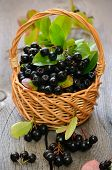 pic of chokeberry  - Black chokeberry in the basket on wooden table - JPG