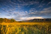 image of cade  - Autumn color at dusk in a golden grass - JPG