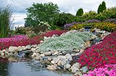 stock photo of petunia  - Waterfalls in summer rock garden with petunias - JPG