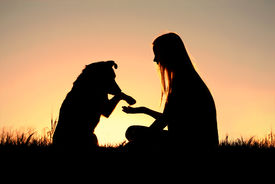 stock photo of pal  - a girl is sitting outside in the grass shaking hands with her dog silhouetted against the sunset sky - JPG