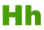 Grass letter H - ecology eco friendly concept character type