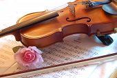 foto of musical instruments  - Violin - JPG