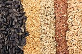image of flax seed oil  - Cereal Grains and Seeds  - JPG