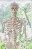 foto of physical education  - Show Human skeleton using human physical education - JPG