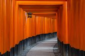 stock photo of inari  - Fushimi Inari Taisha Shrine Torii gates - JPG