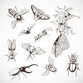 Insect Set, hand Drawn