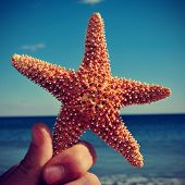 stock photo of echinoderms  - picture of someone holding a starfish with the ocean in the background - JPG
