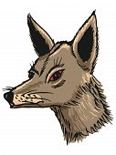 foto of jackal  - hand drawn sketch cartoon illustration of jackal - JPG