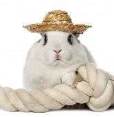 Rabbit wearing a hat and leaning on a rope