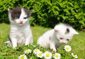 small cats in the grass