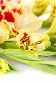 stock photo of gladiolus  - Fresh bright red and yellow gladiolus isolated on white background  - JPG