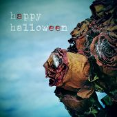 stock photo of cobweb  - closeup of a bouquet of dried roses with cobwebs in a cemetery and the text happy halloween - JPG