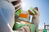 foto of bee keeping  - Low angle view beekeepers unloading honeycomb boxes together from truck at apiary - JPG