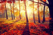 image of orange-tree  - Autumn - JPG