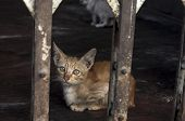foto of baby cat  - A baby cat looking out cage - JPG