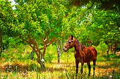 image of chestnut horse  - Digital painting of a chestnut horse out grazing in a field - JPG