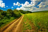picture of rape-seed  - Rape land and road with a rich blue sky on a summer day - JPG