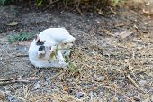 foto of garden snake  - White cat fight green snake in untidy dirty garden danger - JPG