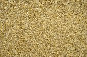 pic of threshing  - Closeup texture of dried crushed wheat straw - JPG