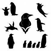 image of animal silhouette  - Penguin set of black silhouettes - JPG