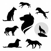 picture of animal silhouette  - Wolf set of black silhouettes - JPG