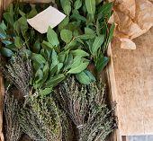 pic of bay leaf  - Fresh herbs - JPG