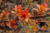 stock photo of orange blossom  - branch with striking orange blossoming leaves closeup - JPG