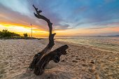 pic of skeletal  - Skeletal braided tree trunk with romantic colorful sunset on the beach of Tanjun Karang Central Sulawesi Indonesia. Wide angle shot long exposure blurred motion. ** Note: Visible grain at 100%, best at smaller sizes - JPG