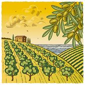 stock photo of olive trees  - Retro landscape with olive grove in woodcut style - JPG