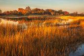 stock photo of tall grass  - Tall golden grass surrounding a pond on an autumn evening - JPG